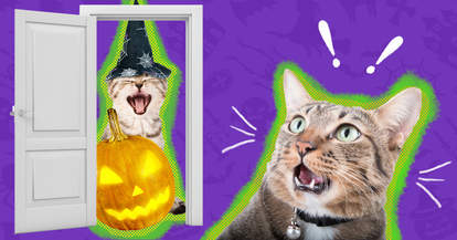 cat scared trick-or-treaters