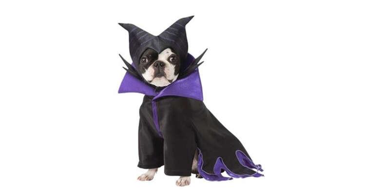 Maleficent dog costume