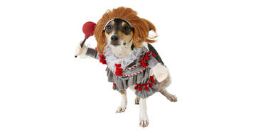 Pennywise dog costume