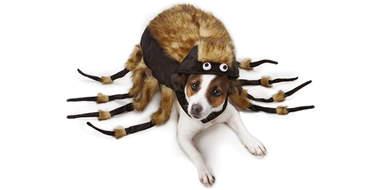 Spider dog costume