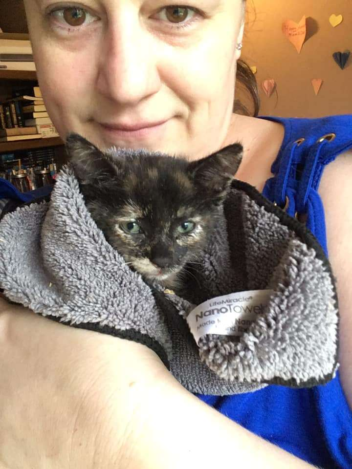 kitten rescued from highway