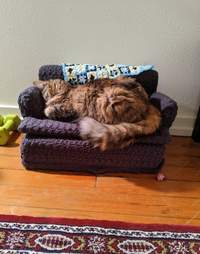 Cat sleeps on a miniature sofa
