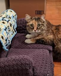 Cat sits on a little crochet couch