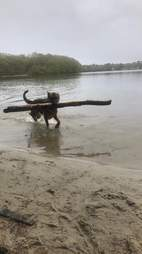 dog finds fallen pole