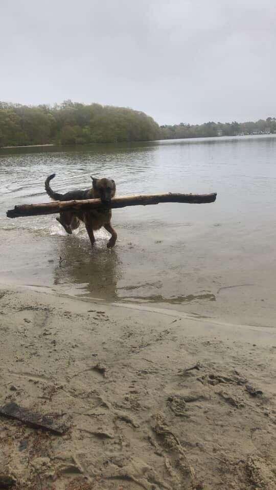 dog finds fallen pole