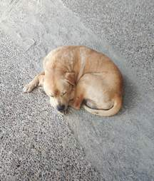 Stray dog found outside supermarket