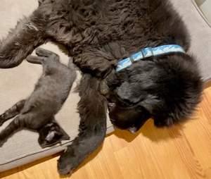 kitten hidden