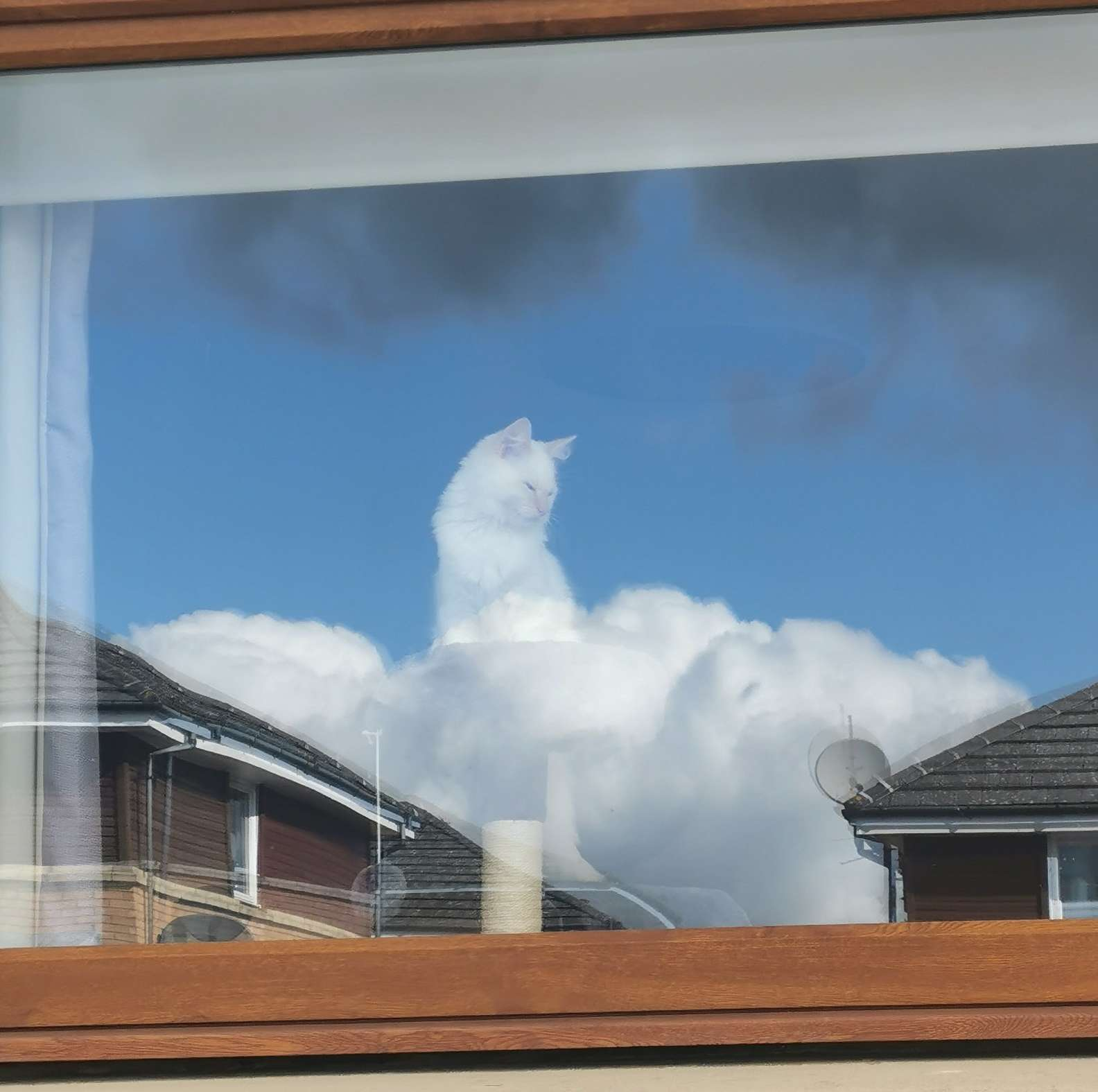Cat Appears Floating in Clouds