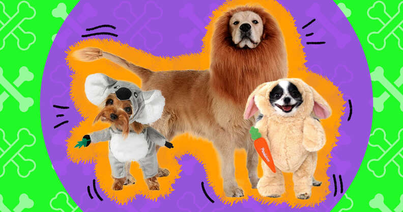 cute dogs in funny halloween costumes