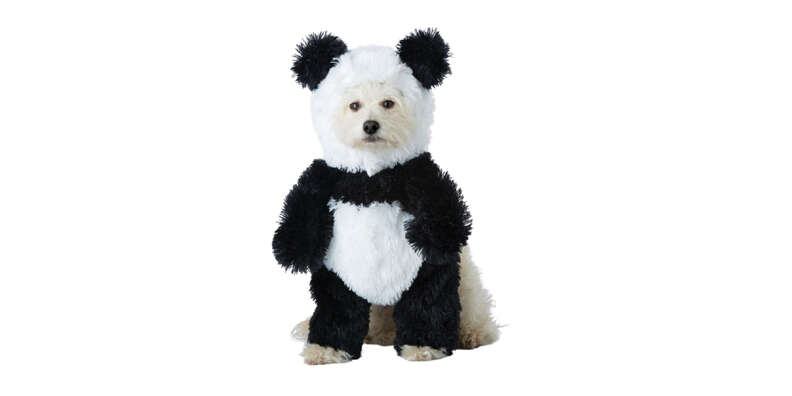 fluffy panda costume for dogs