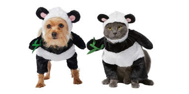 panda costumes for dogs and cats
