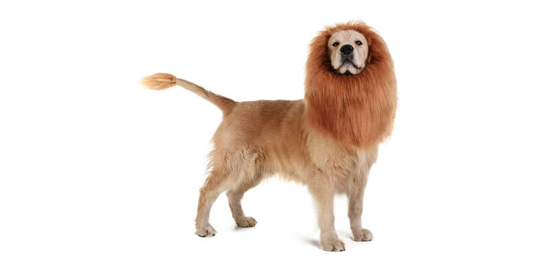 lion halloween costume for dogs