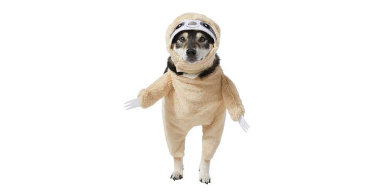 sloth dog halloween costume