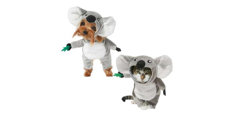 koala dog and cat halloween costumes
