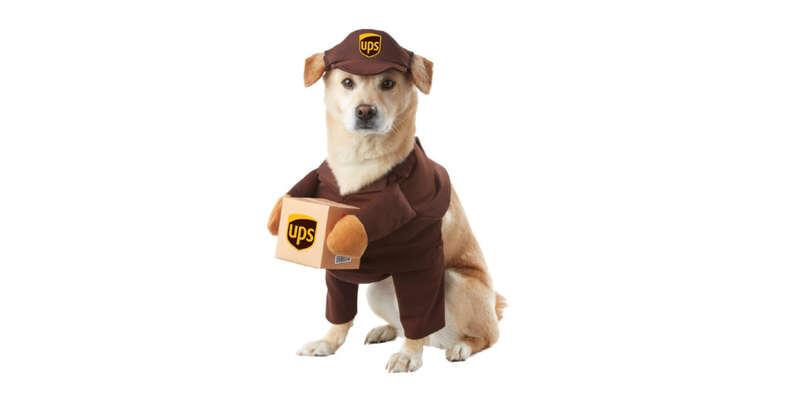 UPS dog Halloween costume
