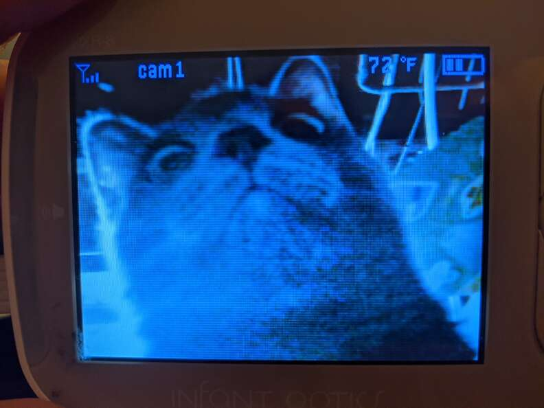 Cat on baby monitor