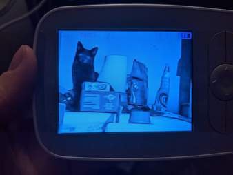 Cat caught being naughty on baby monitor