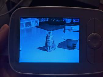 Cats troll mom through baby monitor