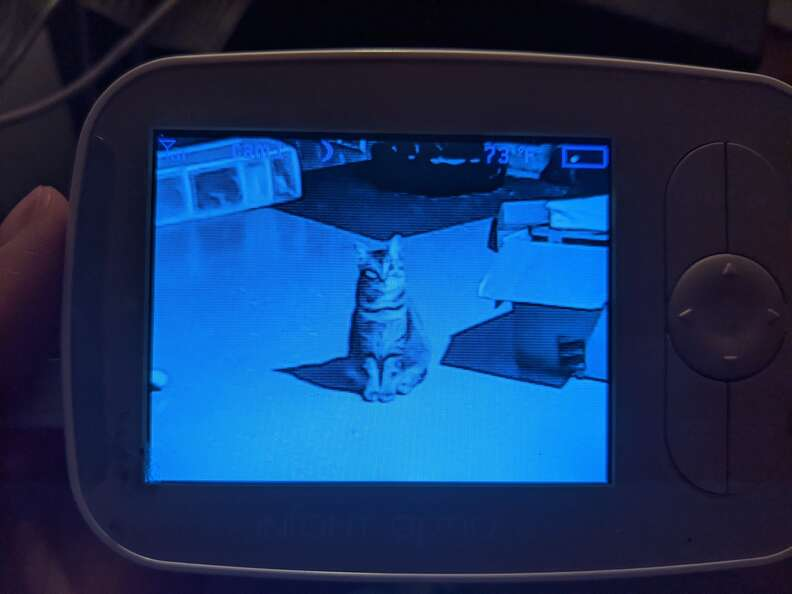 Cats troll mom through baby monitor