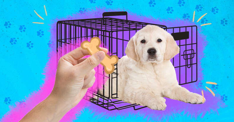 how to crate train puppy