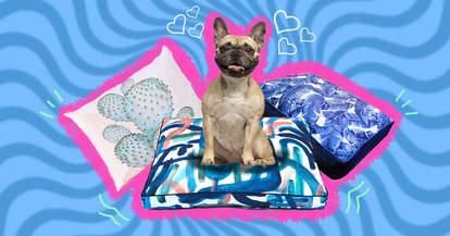 best dog beds round up