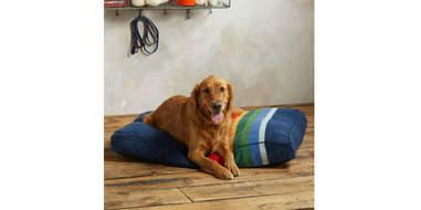 sundance pendleton national parks dog bed