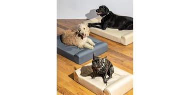 wild one dog bed