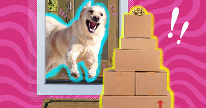 happy dog getting presents in mail