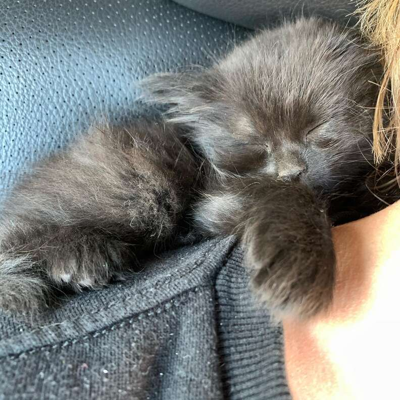 Stray kitten gets rescued and falls asleep immediately