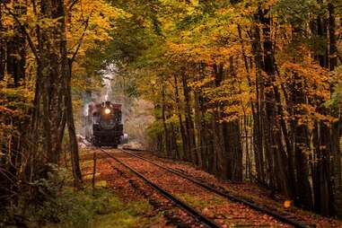 a train chugging through a thick autumnal forest