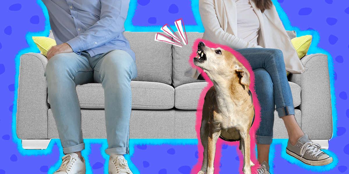 Why Does My Dog Hate My Boyfriend Or Girlfriend?