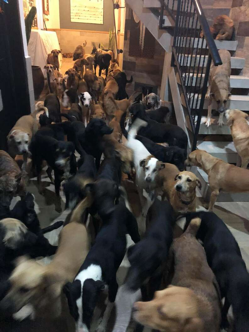 Man brings 300 dogs into his home
