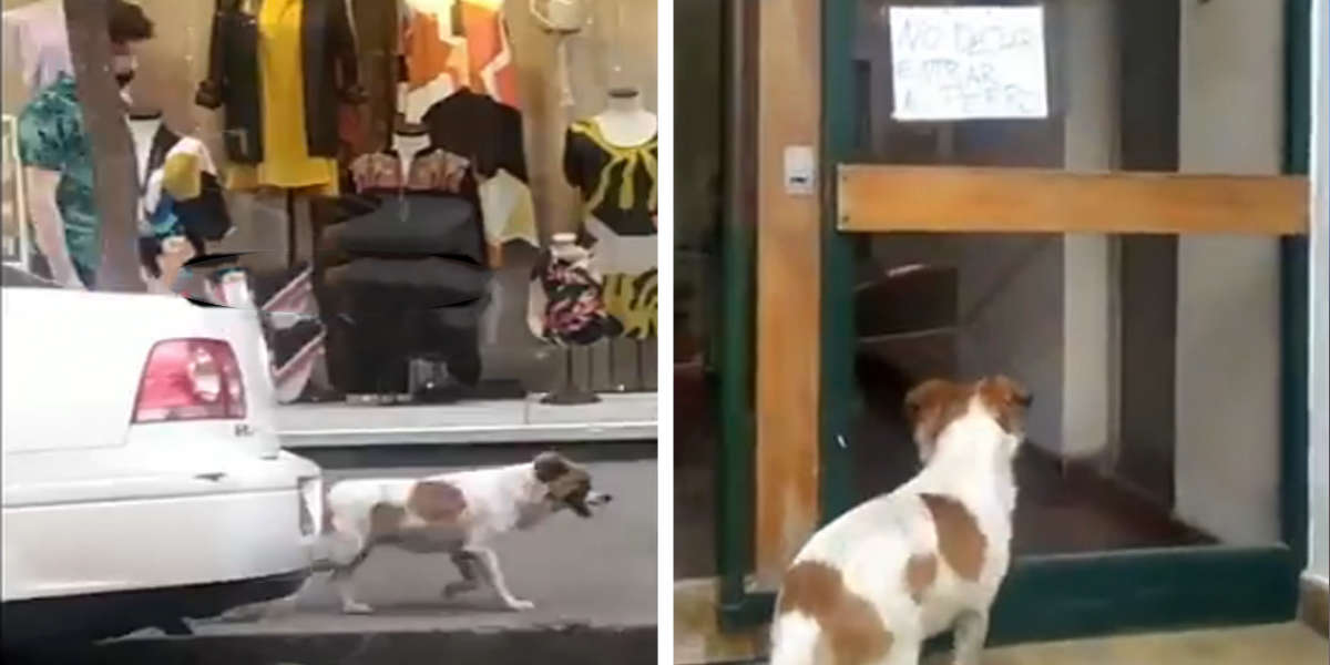 Lonely Dog Leads Rescuers To A Sign Posted On An Apartment Door