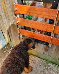 Dogs play through gate in fence