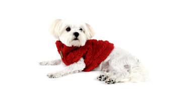 zip-up fleece for dogs