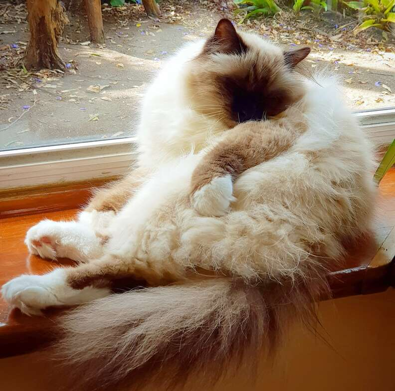 cat next to window