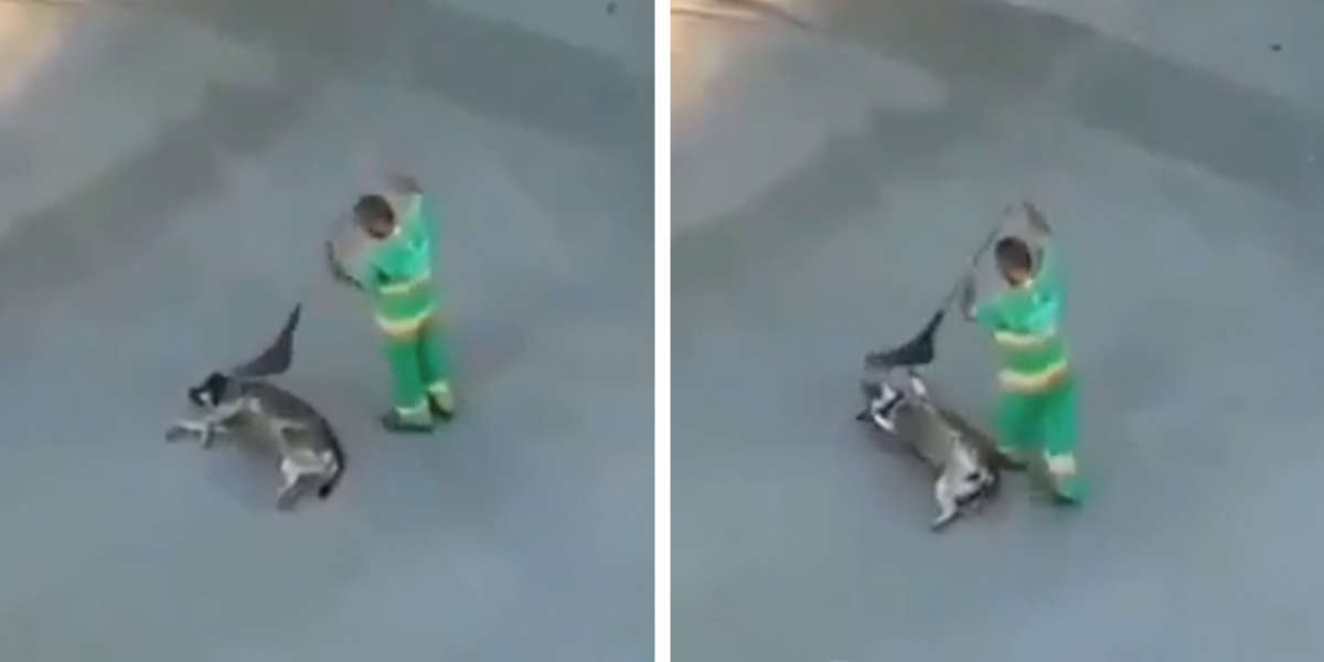 Kindhearted Street Sweeper Caught Making A Stray Dog's Day