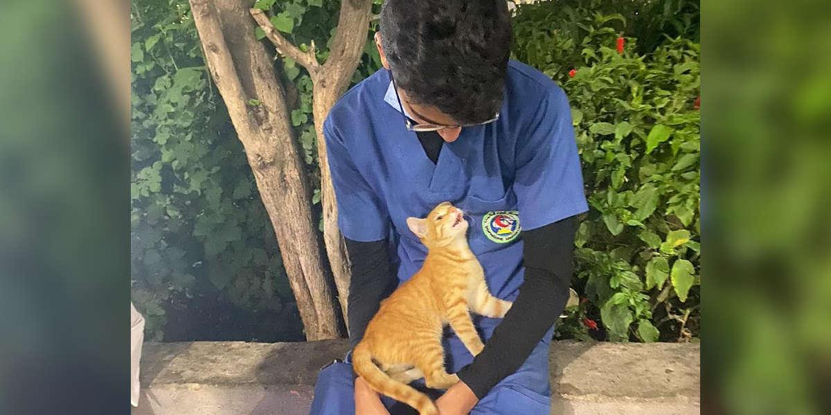 Stray Cat Comforts Tired Nurse On His Break
