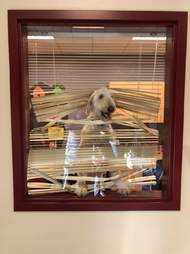 dog in principal's office