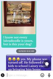 text about dog