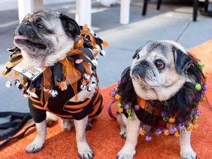 pups at Howl-O-Ween