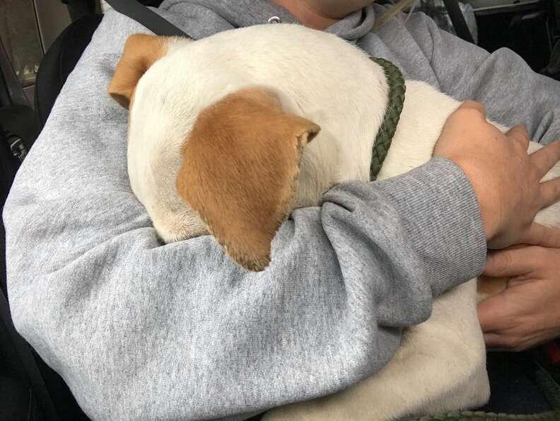 Dog hugs woman who saved him