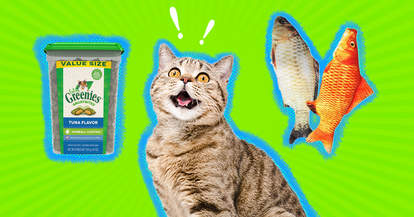 excited cat with fish and treats