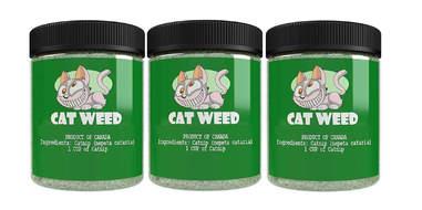 Cat Weed Catnip