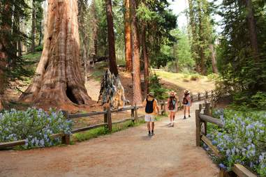 Visit Sequoia and Kings Canyon