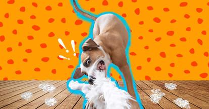 dog destroying a stuffed toy
