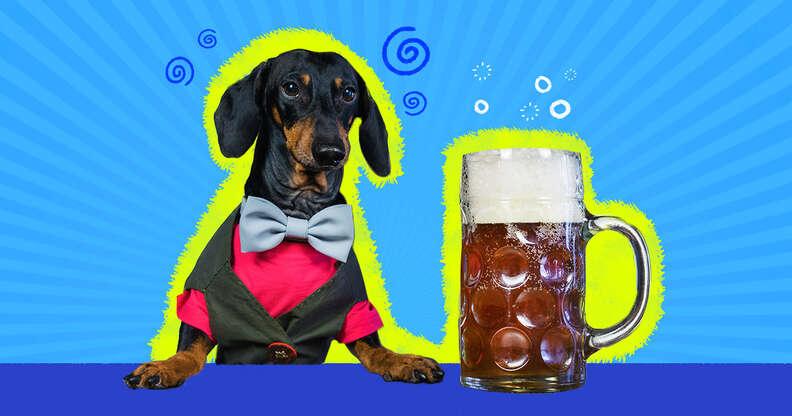 dog drinking a mug of beer