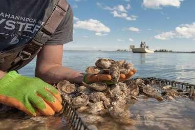 Rappahannock River Oysters, LLC