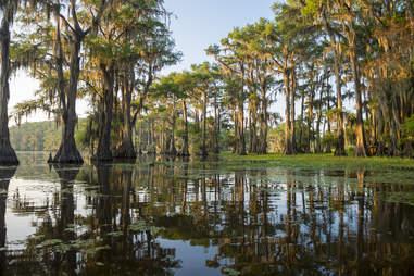 Bayou swamp scene