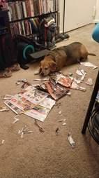 dog makes a mess